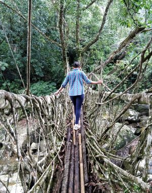 Single living root bridge ~ Such a thrill to experience it!