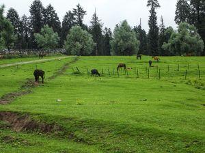 Kashmir-Yousmarg, The untouched part of Kashmir