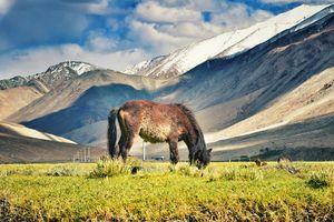 Ladakh 2.0 (A Video blog of my bike ride across Himalayas on Royal Enfield Himalayan)