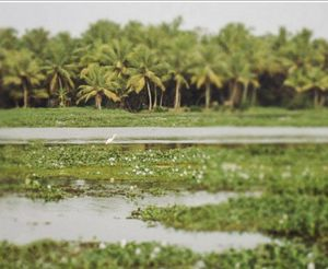 Kerela Known as God's own country for a reason. #colourgreen
