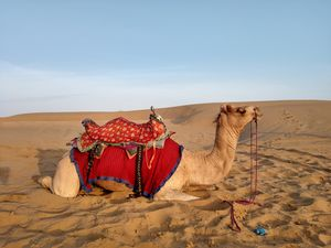 A Day in Jaisalmer : Must Visit
