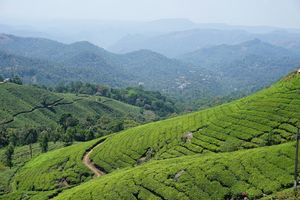 Munnar - Welcoming you to the Kashmir of South India. #Godsowncountry #Kerala