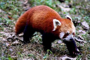 Padmaja Naidu Himalayan Zoological Park 1/undefined by Tripoto