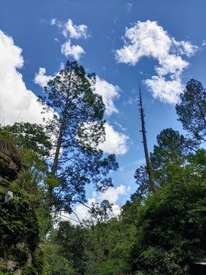Rudradhari Fall : Trek & Tranquil 16/08/19