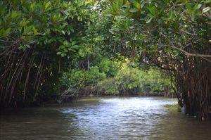 Pichavaram- The mangrove heaven of South