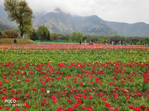 A day spent in the Asia's largest Tulip Garden