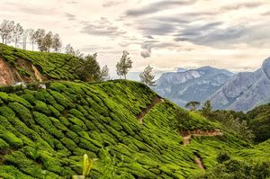 Magical Munnar with Madurai in 3 days! #notinnorth