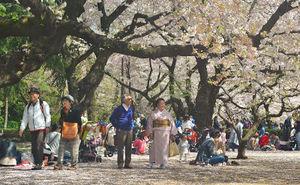 Shinjuku Gyoen National Garden 1/undefined by Tripoto