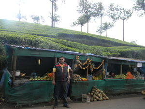 Unrivaled Munnar - Kerala Destination 1