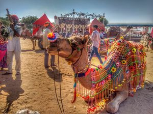 10 Reasons Why the Pushkar Camel Fair is an Exceptional Travel Experience.