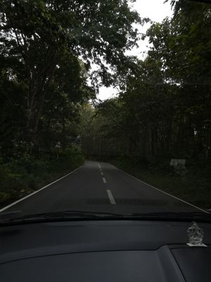 2018 Year end drive through forest roads -Valparai