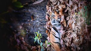 A tiger tale !!! Bandhavgarh Diaries #IssSummerBaharNikal #Notinhills