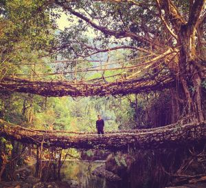 The bridge that leads to serenity  #northeastphotos