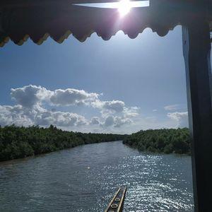 World's Largest Mangroves