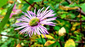 #citykitasveer                            बकेट लिस्ट: फूलों की घाटी