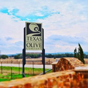 Olive harvesting - into the farms of US