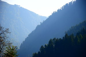 Polling-Barot Valley : Discover Nature's Hidden Treasures In Himachal Pradesh.