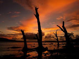 Amazing Andamans in 12 days!