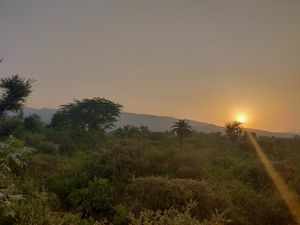This is How to Book Sariska Safari Online .