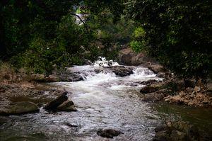 Nowhere else Nilgiri Hills