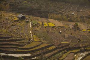 India's first Green Village, Khonoma (Nagaland)