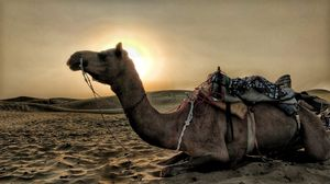 A ride to remember - Rajasthan