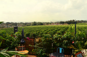 One day trip to Sula Vineyards