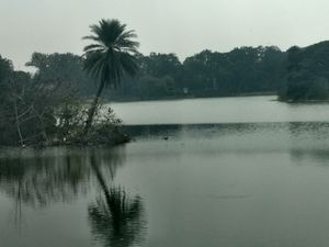 Lalbagh Botanical Garden 1/undefined by Tripoto