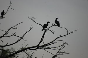 Bharatpur : The Birds, The Bagh & The Boys !