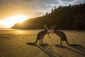 Five things you didn't know about a trip to Australia