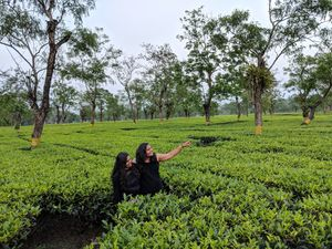 Tea gardens are must watch when we r at Assam!So here we are!????????