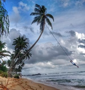 The Palm Tree Rope Swing