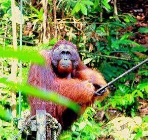 Semenggoh Wildlife Rehabilitation Center 1/undefined by Tripoto