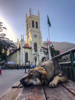 An Evening In Shimla #mykindacity #photoblog