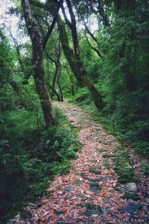 And into the forest I go, to lose my mind and find my soul.  #besttravelpictures