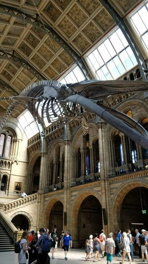 6 Things to see at the Natural History Museum, London