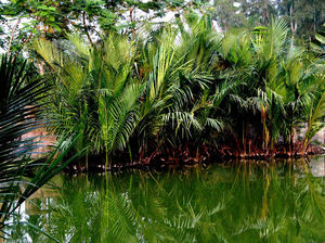 Taki Golpata Forest 1/undefined by Tripoto