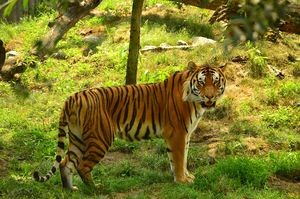 Top 10 Places That Are Perfect for Tiger Spotting in India!