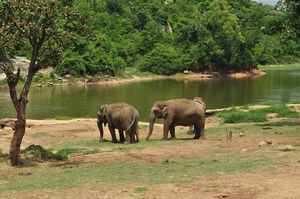 Head To Bannerghatta National Park For A Rendezvous With Nature