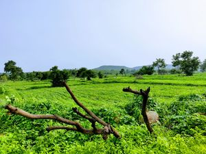 The beauty of green! #BestTravelPictures Theme:Landscape @tripotocommuntity
