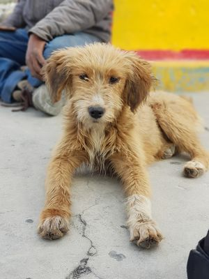 Street dog of leh ladakh.