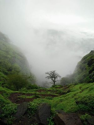 #BestTravelPictures A tree standing alone in thick blanket of fog.#tripotocommunity #nature's beauty