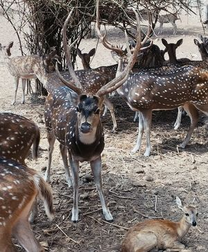 #BestTravelPictures A herd of deers with a fawn sitting side by. #tripotocommunity#wildlife
