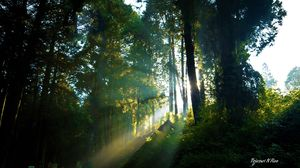 Forest vibes Landscape #Besttravelpictures