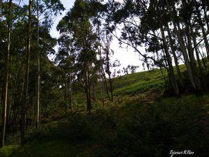 Tea estate Landscape #Besttravelpictures