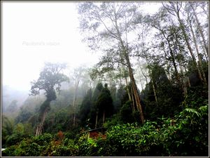 SILLERY GAON:The Best Nature Trail