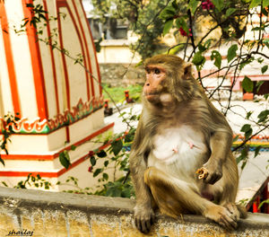 Yes, I am talking about Rishikesh...