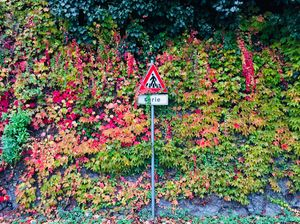 Who doesn't like the colours of fall! Just a beautiful roadside wall. #BestTravelPictures