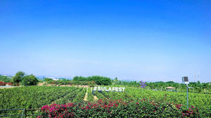 The Grape Escape - Sula Vineyards