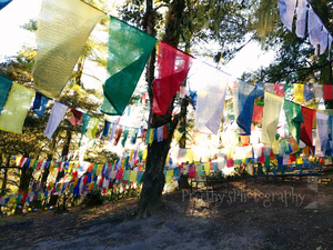 Prayer flags !! Whispering to the God's. #BestTravelPictures @Tripotocommunity @Jetairways